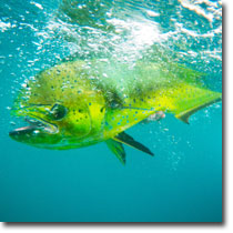 Hosted Fishing Travel